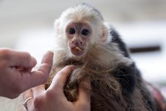 Justin Biebers Monkey to Become German Property